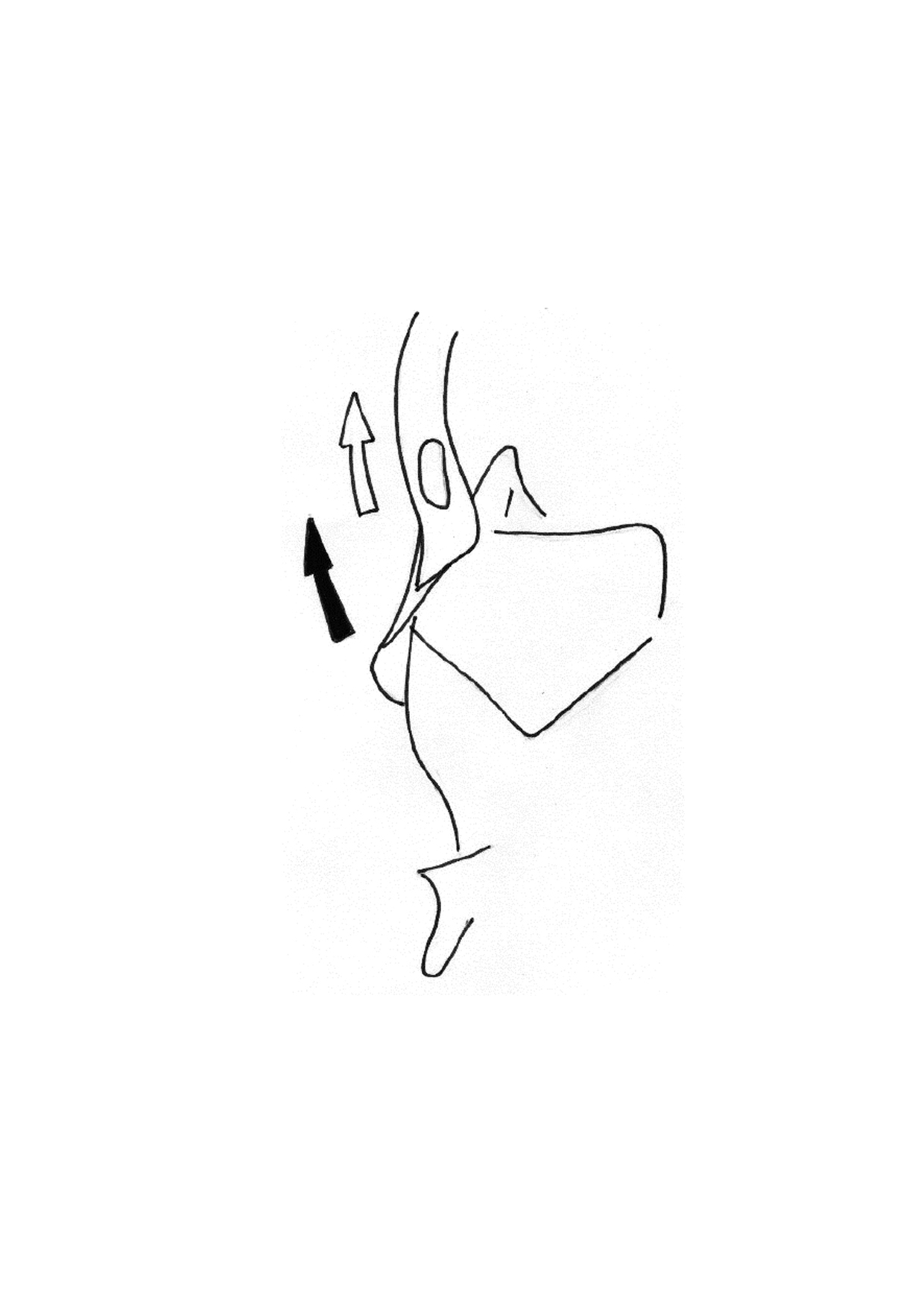 Cinétique de base des os propres sous l'influence du frontal. (Vue interne)